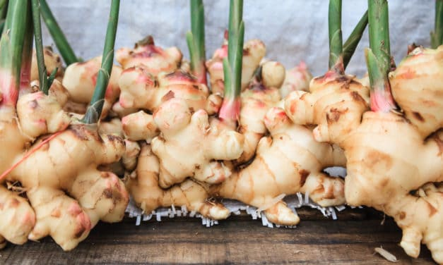 Ginger health benefits